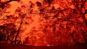 Red sky Australian trees on fire